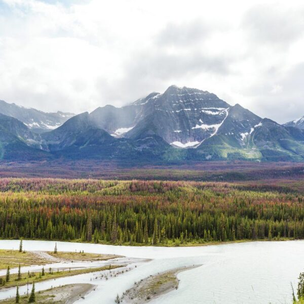 Mountains loom in the background with the Athabasca river in the foreground.
